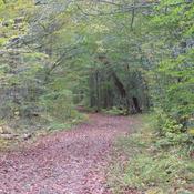 Fall Hiking