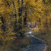 Fall leaves along a river trail