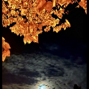 """""""Marvellous Night for a Moondance"""