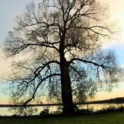 1 Lonely Tree