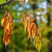 in the autumn/ in the sun