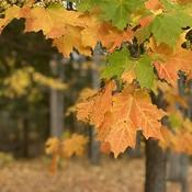 Fall in Progress
