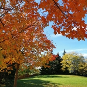 Oct 25 2021 Happy Monday!:) Autumn- King High Park in Thornhill
