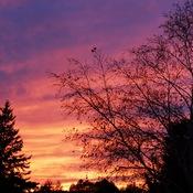 Multi coloured skies