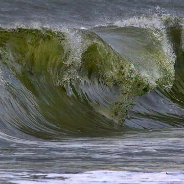 2021-10-25 - Fascinating wild waves to watch today at Esquimalt Lagoon