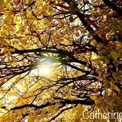 Sunlight Through Autumn Tree - Heart Stirring:)