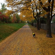 The autumn and the dog