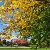 Oct 26 2021 Good morning:) Beautiful Autumn - King High Park in Thornhill