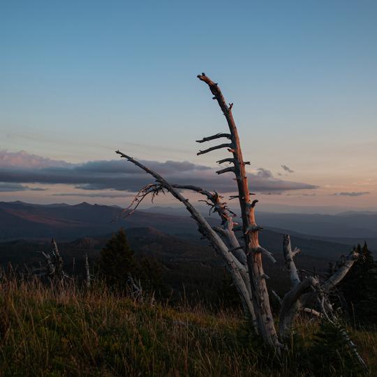 Mount Washington Wilderness