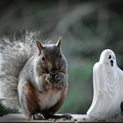 Trick or treat....
