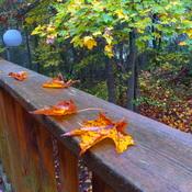Northern Ontario Autumn Vibes