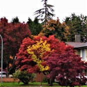 Fall colors in Richmond, BC