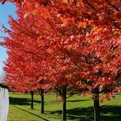 Oct 27 2021 13C Autumn gorgeous sunny day - Calvert Park in Markham
