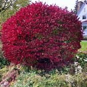 Burning bush!!