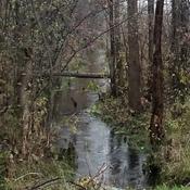Creek Full