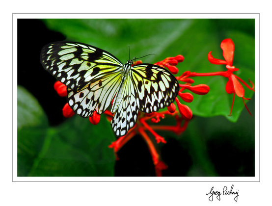canadian geographic photo club butterfly conservatory. Black Bedroom Furniture Sets. Home Design Ideas