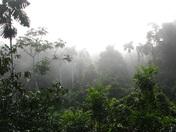 Amazon Canopy Early Morning