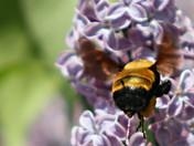 Bee Pee.jpg