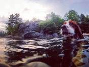 4b. Dog Days of Summer