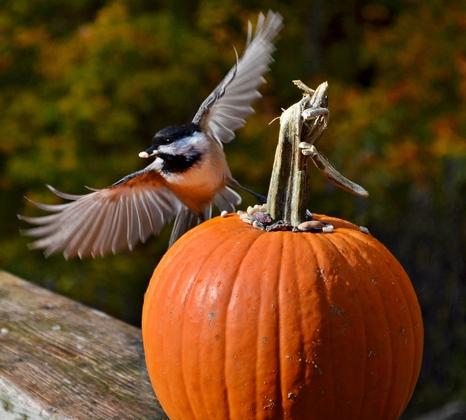 Happy Thanksgiving:)