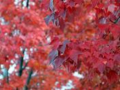 Blood Red Fall
