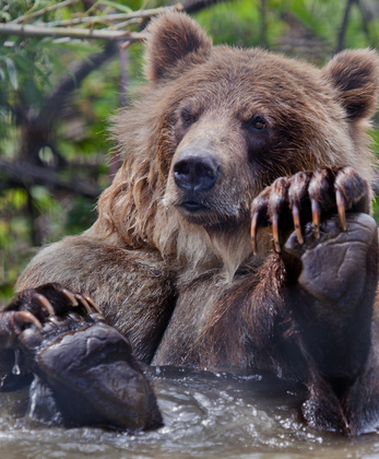 Grizzly Bath