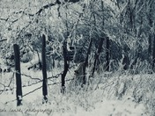 6b. Winter