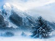 5c. Winter wonderland