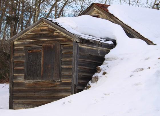 Winter Forever
